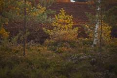 DSC_8254 (andrey.salikov) Tags: colour fall beautiful wonderful photo nice scenery gorgeous free sensual latvia stunning mm 500 lovely f18 lettonia d60 espectacular  niceplace niceimage fantasticcolors  peacefulmind moodshot dreamscene goodatmosphere fantasticplaces 500mmf18 colourfulplaces daynikon pagasts trelis latviangirl cenastrelis babtes babtespagasts relaxart magnifiqueniceday nikond60500mmf18 harmonyvision babitemagnifique babtespagastsbabite purvalaipa