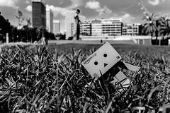 "275/365 "" Viernes / Friday "" (j.borras) Tags: barcelona blue summer sky blackandwhite bw black grass nikon weekend friday danbo j3 project365"