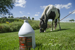 20140902_onestop_supplementshoot_ITS-0011 (wearesculpt) Tags: horse shop one iowa stop bo iowacity equine supplement