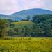 Meadow in Boone