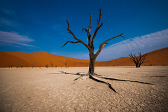 Deadvlei (Thierry Hennet) Tags: blue orange brown texture nature zeiss landscape outdoors sand desert african dunes sony structure treetrunk clay sanddune namibia sossusvlei namib a900 cz1635mmf28