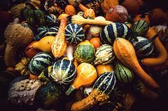 Decorative (Melissa Maples) Tags: autumn germany garden deutschland nikon europe pumpkins sigma baroque 1020mm ludwigsburg pumpkinfestival  blhendesbarock f456 krbisausstellung hsm  1020mmf456 d5100