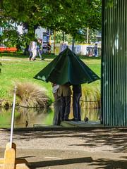 The Meeting of the Irish Green Umbrella Club (Steve Taylor (Photography)) Tags: umbrella brolly green brown river avon men newzealand nz southisland canterbury christchurch city tree sunny sunshine