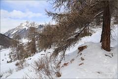 Du 10 au 18 Février 2017 _ Ceillac (ChantalNoug) Tags: ceillac famille hotellacascade neige vacances provencealpescôtedazur france fr vvf balade la cime du mélezet