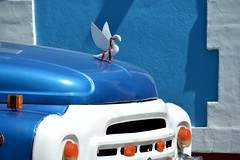 Bleu de Trinidad - oiseau mascotte de radiateur (Olivier Simard Photographie) Tags: trinidad cuba camion véhiculeutilitaire transport ford gaz bleu mascotte mascottederadiateur années50 camiongaz couleur oiseau capot calandre mur camión vehículoutilitario transporte vado azul mascota mascotaderadiador 50 color pájaro capó calandra pared truck utilityvehicle blue mascot radiatormascot the50s bird hood calender wall gaztruck fordtruck