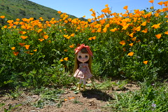 Peanut in the Poppies