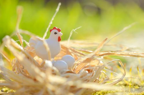 Spring chickens! (74:365:2017)