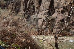 IMG_0827 (em.lincoln7) Tags: nature sarah mom spring getaway zion sue em stgeorge gmc 2014 gpc