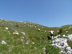 fields of green grass (briiblog) Tags: flowers friends trekking marmots montebaldo naole valfredda colonei