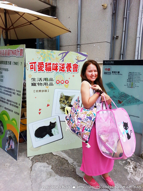 20140614華山貓咪送養_110023c