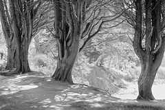 Sketches of Brittany 47 (Broot - Thanks for a half million views!!) Tags: winter blackandwhite bw france monochrome march brittany
