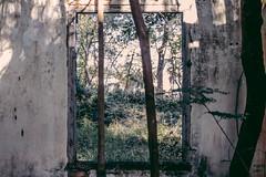 Abandoned house (Erik Nardini) Tags: street windows house texture abandoned nova vintage photography casa sunday 50mm14 velha erik antiga sales campinas desolation moraes janelas abandonada nardini canon7d