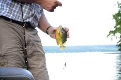 not a bass (ktLaurel) Tags: summer fish rainbow fishing dad upstatenewyork overexposed fingerlakes sunfish