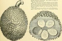 Anglų lietuvių žodynas. Žodis manila tamarind reiškia manila tamarindas lietuviškai.