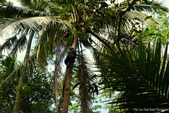 Climb For Coconut