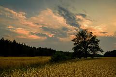 Bjurs, Kungsängen, Upplands-Bro, Sweden.. (Marc Arnoud Rogier van der Wiel) Tags: sunset sky tree field clouds nikon cloudy sweden lee d600 kungsängen upplandsbro httpsrbphotographiccouk