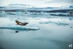 Jkulsrln glacier lagoon (markmartucciphoto) Tags: travel iceland lagoon glacier jkulsrln markmartucciphotography