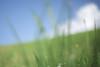 Summer has come :))) (けんたま/KENTAMA) Tags: summer canon bokeh july bluesky 雲 ze 6d carlzeiss 草原 planart50mmf14 7月 planart1450 夏空