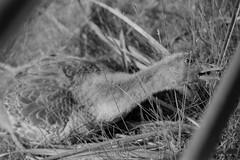 Reaching for it (Minolta X-500, AgfaPhoto APX 100) (baumbaTz) Tags: blackandwhite bw slr film monochrome analog germany deutschland iso100 blackwhite minolta atl hamburg may ishootfilm 150 mai scanned apx100 epson sw analogue monochrom grayscale agfa rodinal schwarzweiss apx analogphotography 2200 greyscale 2014 filmphotography jobo fpp ilovefilm v500 adox adonal x500 filmisnotdead autolab vuescan analoguephotography agfaphoto minoltax500 istillshootfilm filmforever epsonv500 agfaphotoapx100 adoxadonal filmphotographyproject bwfp believeinfilm blackandwhiteology atl2200 joboautolabatl2200 20140531