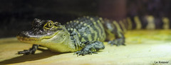 Zoo Le Bugues (le kosovar) Tags: 50mm zoo dordogne le reptiles bugues