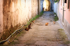 The cat's alley, Procida (L'inspiration vient en expirant) Tags: world street travel summer italy cats color animals cat island europe italia photographer ile isle procida