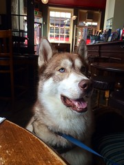 In the pub with @Gigapup.