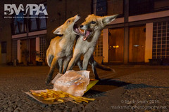 BWPA 2014 - Animal Behaviour - Highly Commended (markgsmith) Tags: city uk light urban london canon photography high lowlight mark wildlife low competition smith iso fox british awards highly highiso 2014 vulpes commended bwpa
