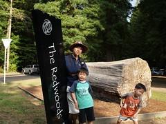 NZ Redwoods (dam.dong) Tags: travel me jin nz redwoods min e500