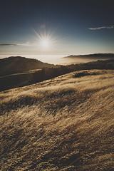 amber waves | russian ridge, california (elmofoto) Tags: sanfrancisco friends sunset field northerncalifornia landscape outdoors nikon hike clear ridge lensflare flare photowalk bayarea paloalto sfbayarea openspace norcal peninsula preserve windblown d800 sunflare russianridge 2470mm fav250 fav100 fav200 fav300 goldengrass 25000v sunblast vsco fav500 nikond800 fav400 fav600 fav700 elmofoto lorenzomontezemolo