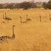 African safari, Aug 2014 - 014