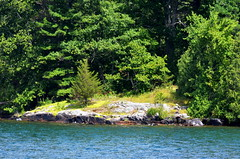 Rocks, Pine, Water... [Gananoque - 7 August 2014] (Doc. Ing.) Tags: cruise wild summer lake ontario canada nature water river boat kingston gananoque northamerica lakeontario laker 1000islands on 2014 saintlawrenceriver leedsandthethousandislands