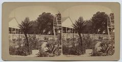 Scenes at the San Pedro Park. (SMU Central University Libraries) Tags: cactus gardens texas botanicalgardens yucca aloes urbanparks stereoviews hahenryadoerr18261885