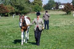 BQ__9914.jpg (brian.quinlan) Tags: england horses people animals capri unitedkingdom showing aspull athertonoldhallfarm lauraherrera september2014 westhoughtonridingclubshow