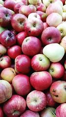 Along for the ride 37/52 (rmrayner) Tags: picked apples grasshopper harvested redapples ciderapples ashcombecider2014vintage