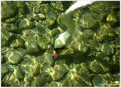 Schwan (mayflower31) Tags: see wasser steine schwan vogel