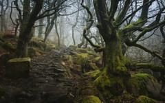 Forest Path 2 (J C Mills Photography) Tags: peakdistrict derbyshire woodland forest trees padleygorge boulders moss winter mist fog uk england landscape longshawestate