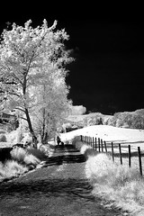 A Walk On The Dark side (TrotterFechan) Tags: moniaive infrared tree fence black white