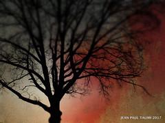 Un jour nouveau (JEAN PAUL TALIMI) Tags: arbre campagne talimi bourgogne automne silouettes rouge nature campagnebourguignonne coucherdesoleil arbres branches jardin texture france appoigny