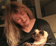 Jinx 2 Years (lunawicc) Tags: jinx jinxie cat siamese me love whiskers anniversary mikulculver