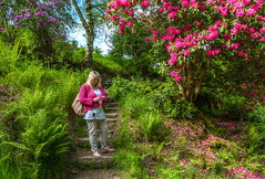Steps of Errwood (Rustybricko) Tags: flowers buxton steps hdr rhododendrons thepeakdistrict goytvalley errwoodhall