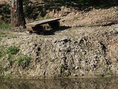 (:Linda:) Tags: germany thuringia village bürden pond bench handmade tree