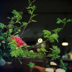 Sato Coffee (akeko_) Tags: flower film rollei rolleiflex cafe sapporo hokkaido bokeh planar carlzeiss filmphotography