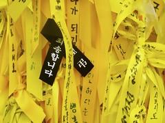 Yellow Ribbons One Black (screenpunk) Tags: memorial remember respect korea seoul rememberance yellowribbons sewol