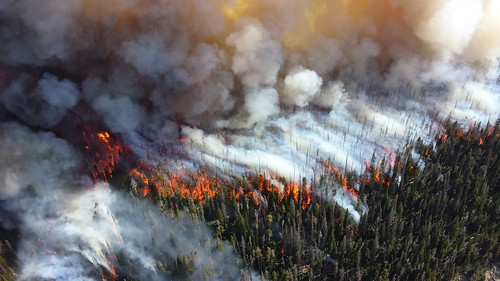 Wildfires are not prevented by thinning forests, but current pro-logging policy does not recognize this.