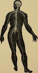 Anglų lietuvių žodynas. Žodis capillary tube reiškia kapiliarinis vamzdis lietuviškai.