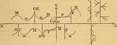 Anglų lietuvių žodynas. Žodis algebraic value reiškia algebrinė vertė lietuviškai.