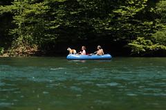 Schlauchboot Sevylor Caravelle K105 ( Gummiboot ) mit Bordhund auf dem Rhein unterhalb B.ibermhli - B.ibernhofgut im Kanton Schaffhausen in der Schweiz (chrchr_75) Tags: dog chien rio ro river boot schweiz switzerland boat europa suisse swiss fiume rivire hund juli reno christoph svizzera fluss rhine rhein strom rin rijn jolla canot dinghy bote schlauchboot caravelle 2014 rivier  suissa joki rzeka jolle gummiboot flod sloep rhin schwimmweste chrigu 1407 sevylor hochrhein  rhenus chrchr hurni k105 chrchr75 chriguhurni bordhund chriguhurnibluemailch albumrhein gummiboote juli2014 hurni140706 albumrheinsteinamrheinrheinfall albumschlauchbootsevylorcaravellek105 albumhochrhein