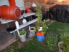 Some containers of plants (coupe1942) Tags: compost compostbin composter diycomposter