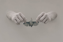 Wall Art: Bird (aleah michele) Tags: bird monochrome hands wallart hold aleahmichele aleahmichelephotography