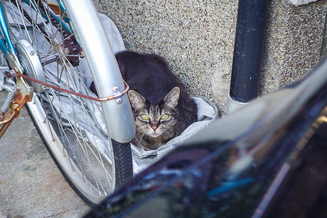 Today's Cat@2014-07-31